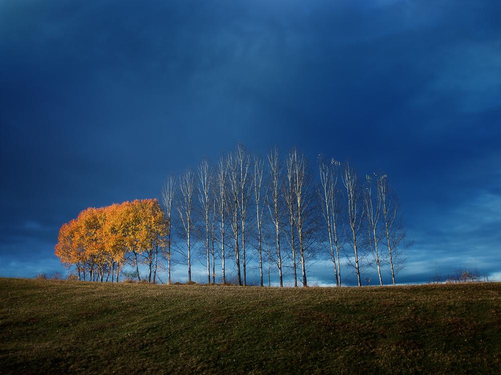 Autumn Trees at Horehronie, Slovakia