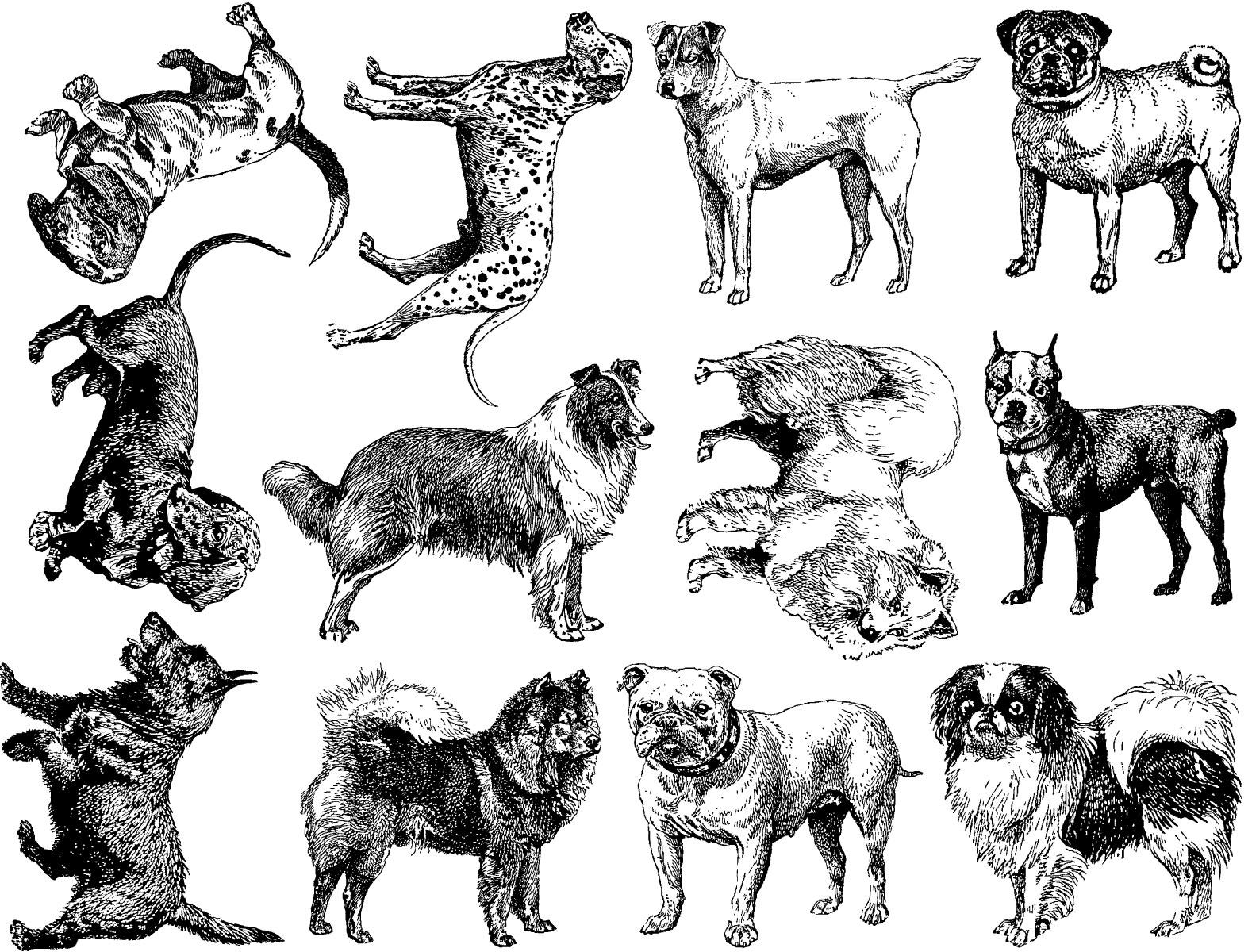dog breeds ceramic decals food safe custom ceramic decals Kinds of Donkeys dog breeds ceramic decals food safe