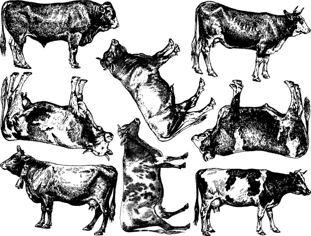 Cows Breeds Low Temperature Enamel Decal