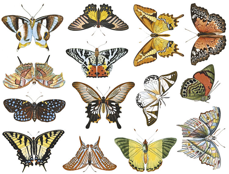 Colorful Butterflies 1 Glass Fusing Decal Ceramic Decal Enamel