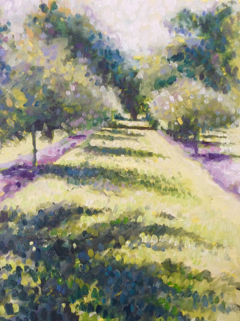 Orchard Shadows