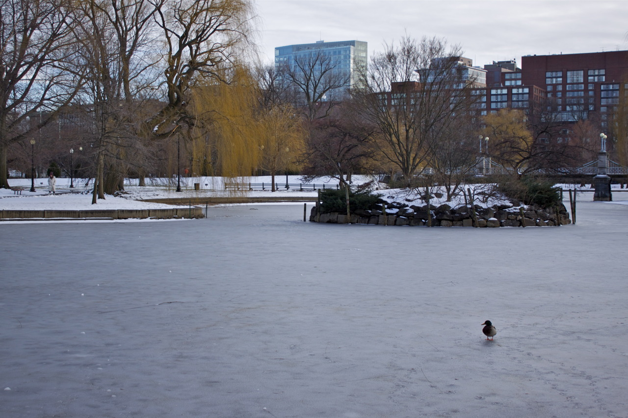 The last duck.  #photo #Boston