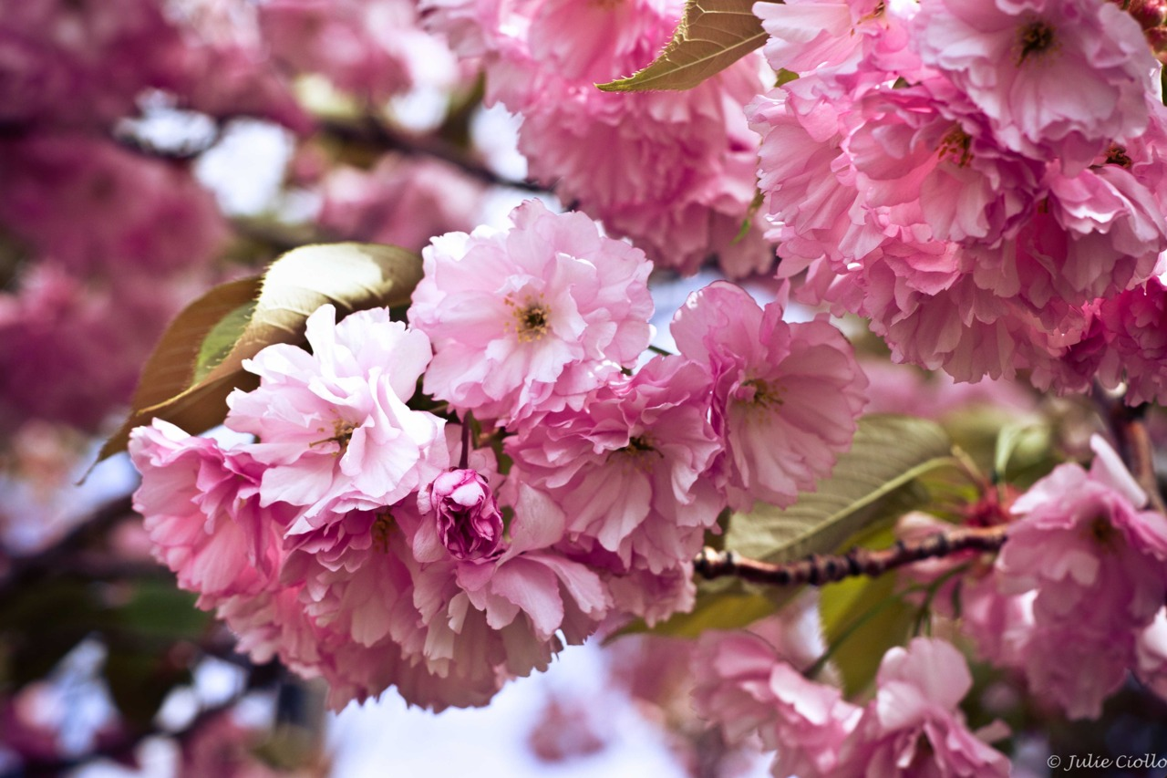 """ Love, whose month is ever May,      Spied a blossom passing fair  Playing in the wanton air"""