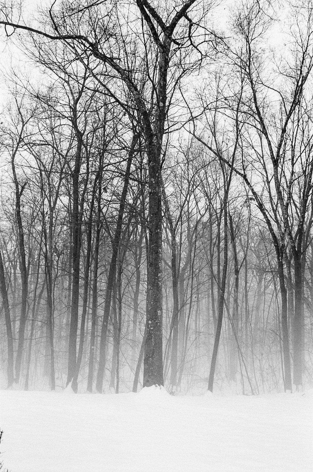 LeicaM6_TriX400-225.jpg