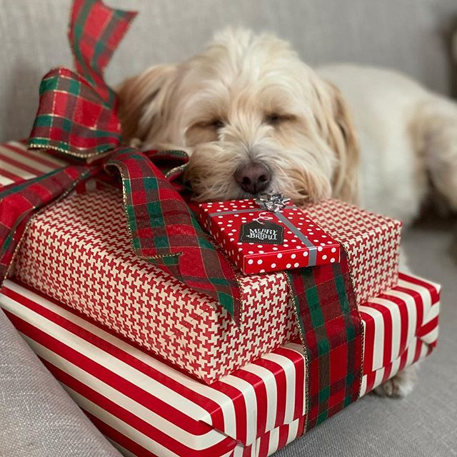 Guarding the gifts...sweet Vincent  #rescuedog #homefortheholidays #bestfriend #gifts #dogs