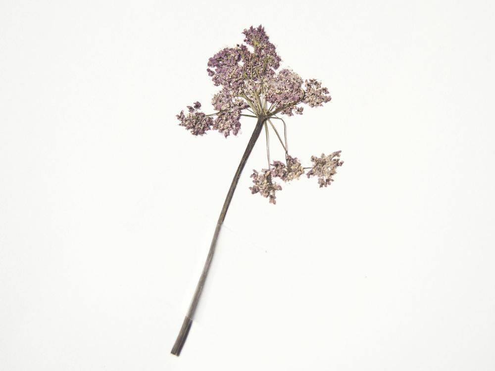 fleur-seche.jpg