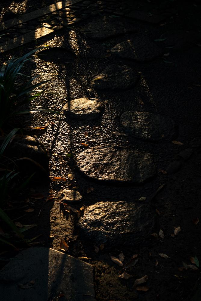 feeble light-8.jpg