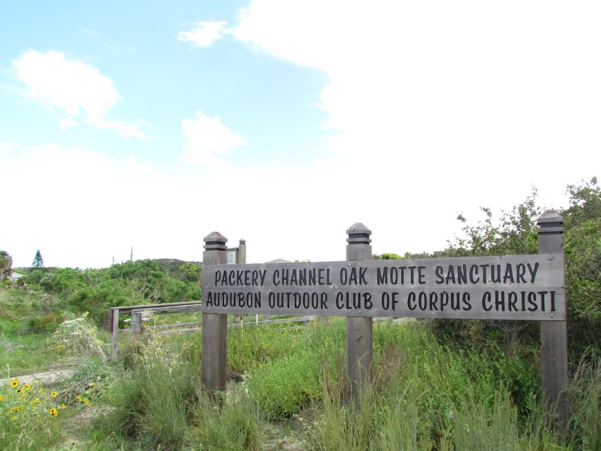 Packery Channel Oak Motte Sanctuary Sign - Shane Reader