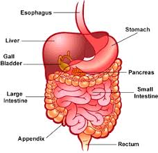 Your digestive system's health is a reflection of your lifestyle
