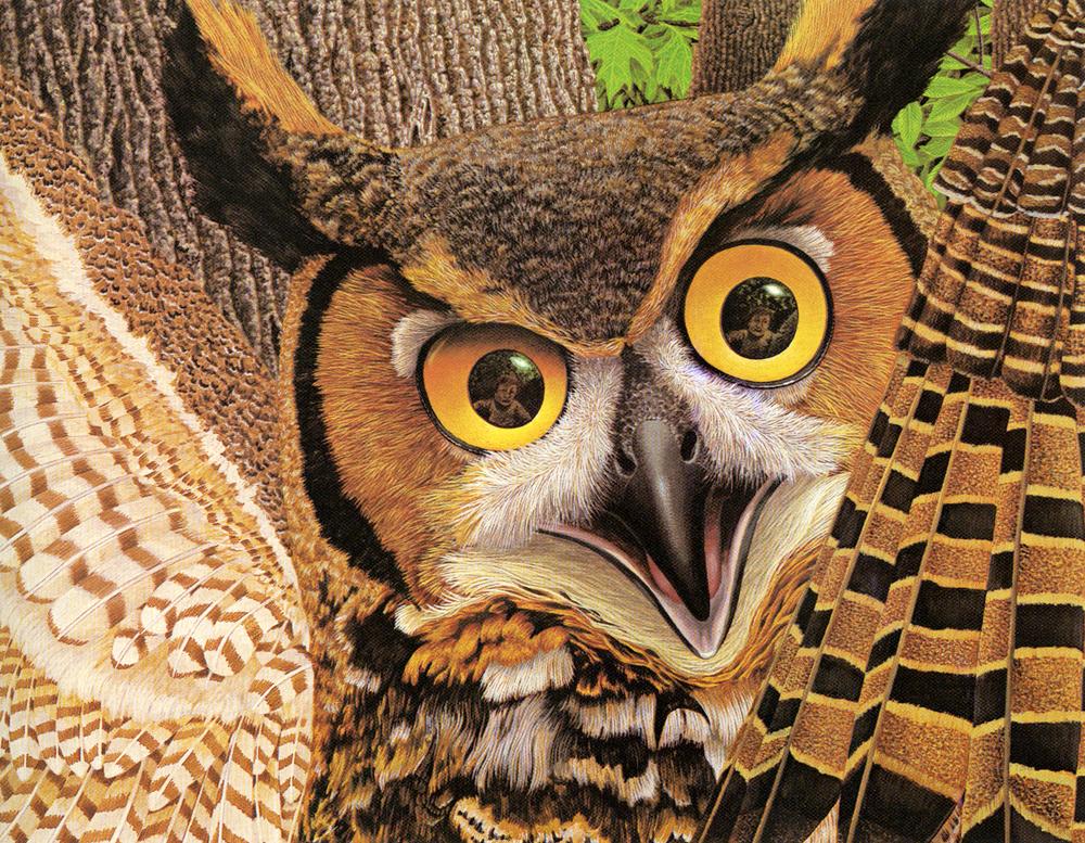 fc-owl.jpg