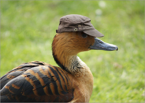A duck with a hat on its head.