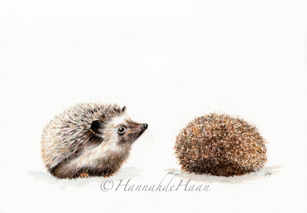 Hedgehog Edited.jpg
