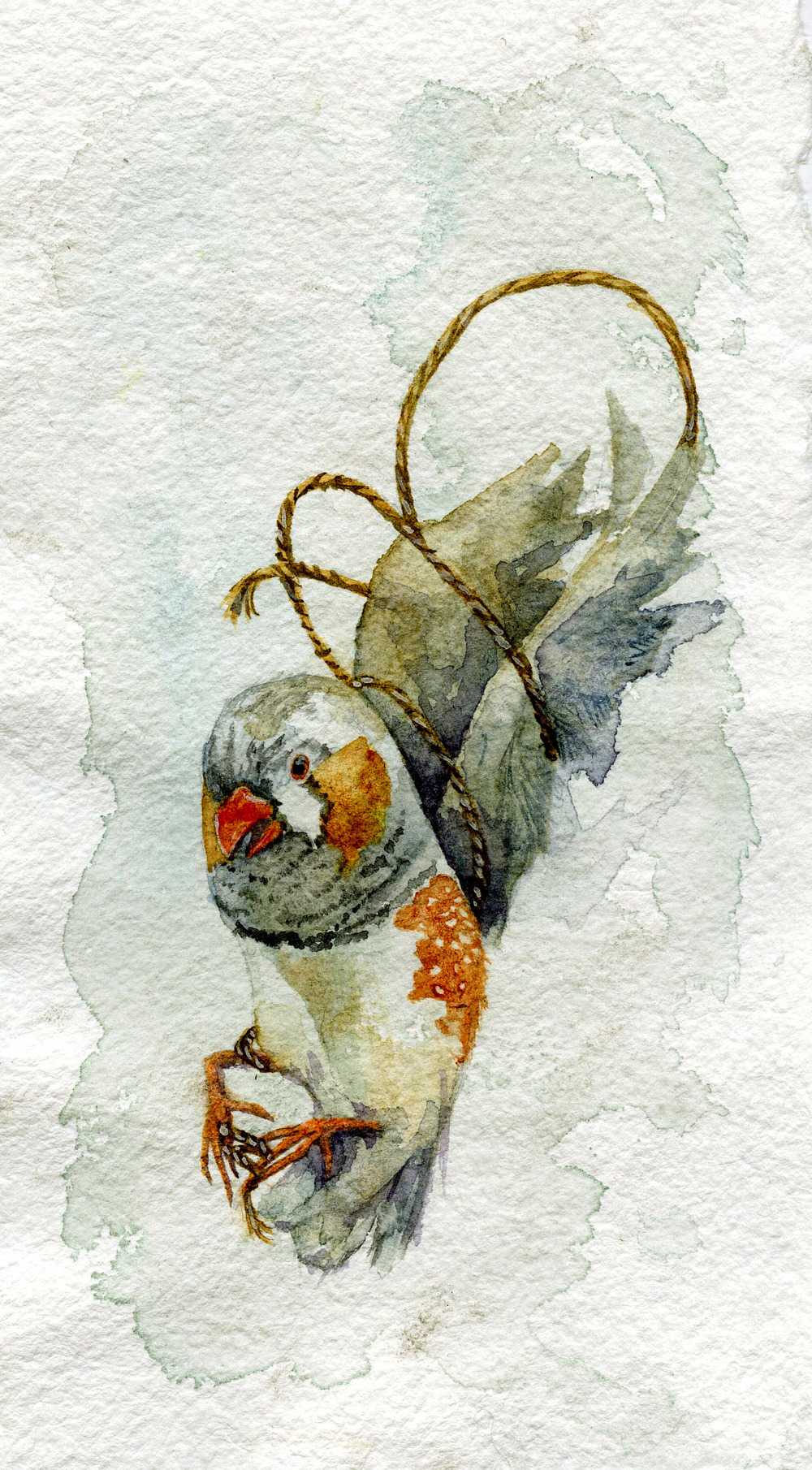 Parakeet  Watercolor on paper 2014  Freedom of movement gets restricted when bird owners decide to clip their pet's wings.