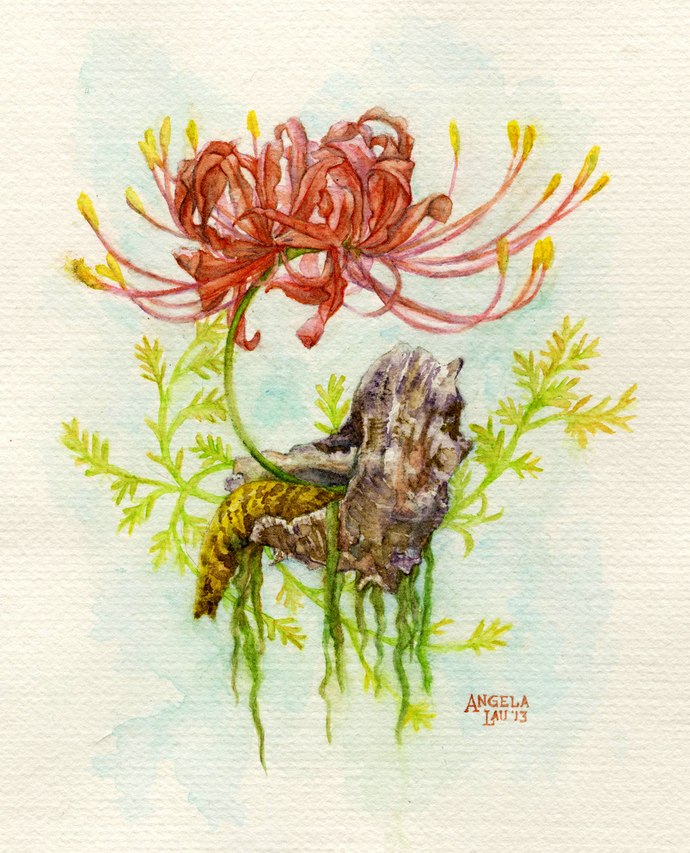 Snail and Spider Lily  Watercolor on paper 2013  A sea snail and a spider lily.