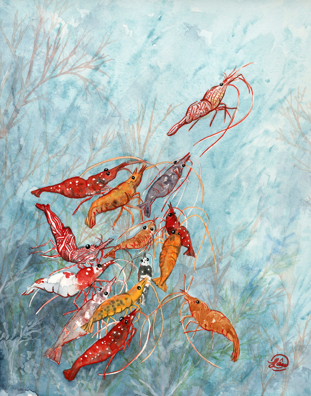 Shrimp Watercolor, ink and gouache 2014 Shrimps are the scavengers of the sea.