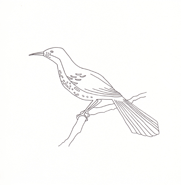 Georgia - Brown Thrasher