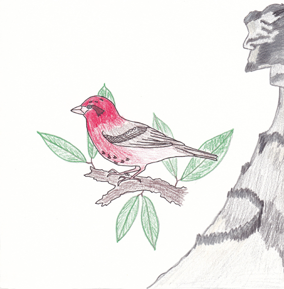 New Hampshire - Purple Finch