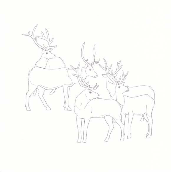 Utah - Elk - Five