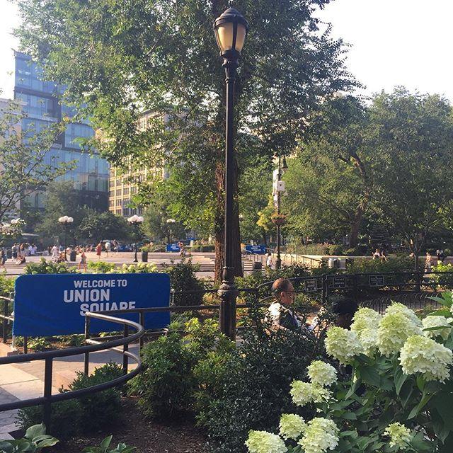 Union 🔹 Square 🔹Park 🔹#cevichny #cevich #ceviche #unionsquare #park #nyceats