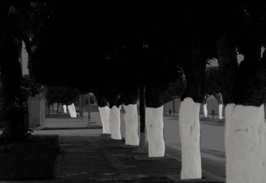 Scared bothered and bewildered tillett lighting design - White painted tree trunks ...