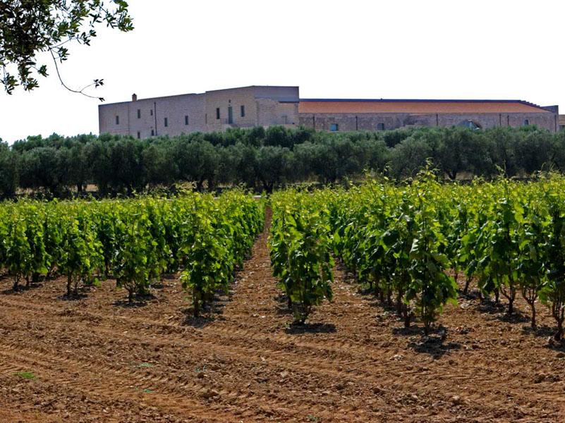 Li Veli vineyard.jpg