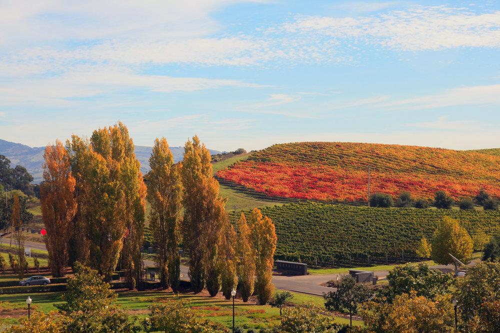 Fall_in_Napa_Valley.jpg