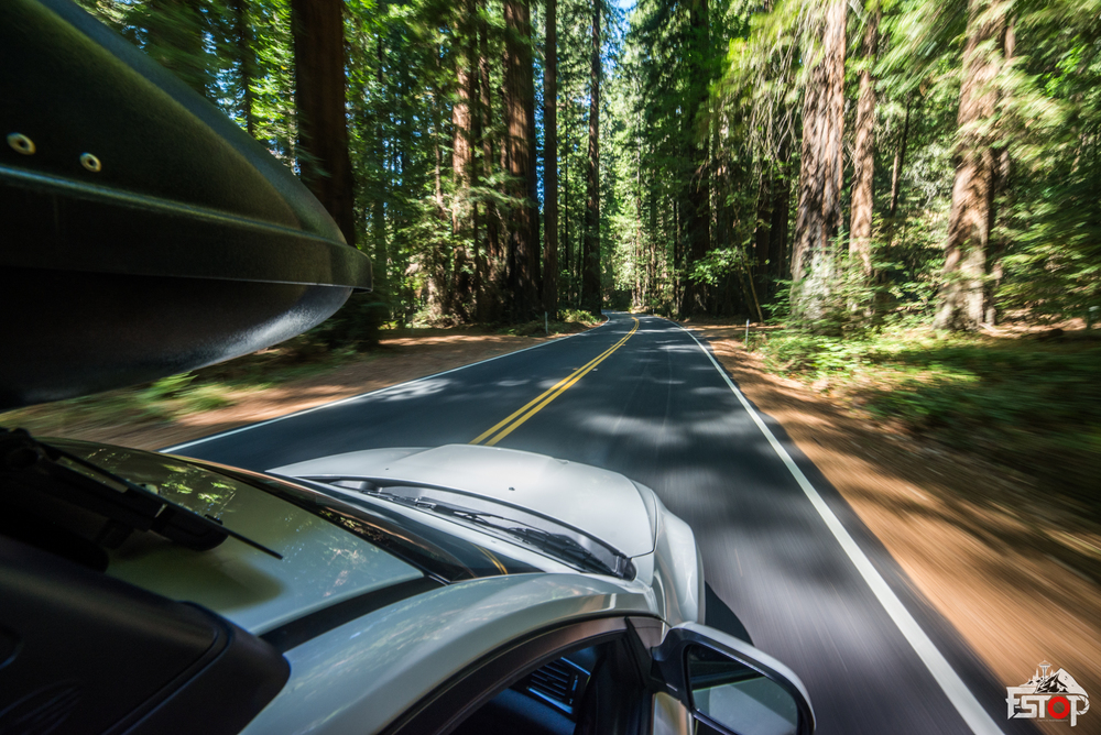 Driving through the Redwoods