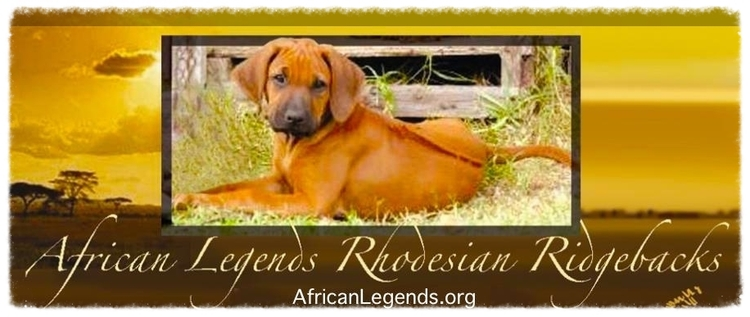 African Legends Rhodesian Ridgebacks