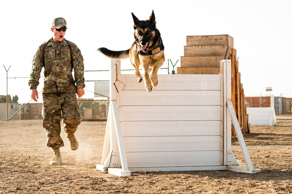 Even the military is realizing that with force-free training you get stronger relationships between handler and dog and decreases dog-handler conflicts.