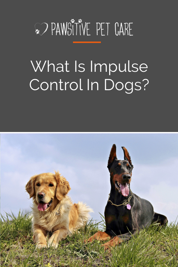 training impulse control in dogs — The Pawsitive Effect Dog