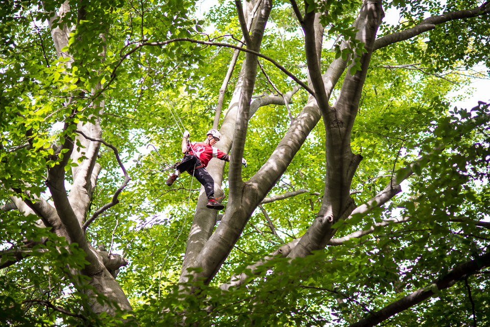 ASM MTCC ISA Tree Climbing Michigan 2015.jpg