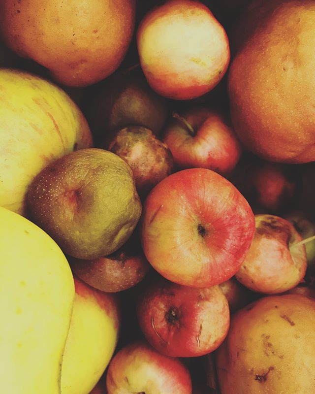 just nice apples (and a couple medlars and pears). we live for this.