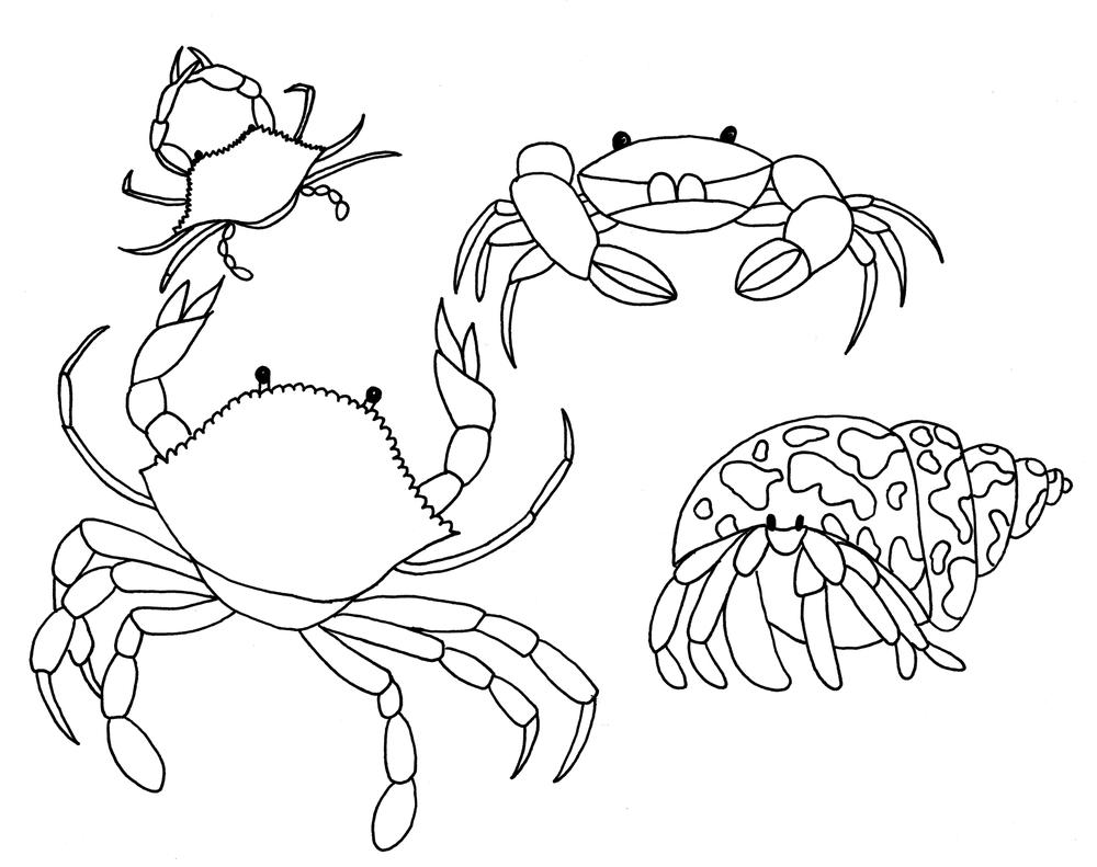 Crustaceans 1.jpeg