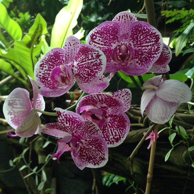 Beautiful orchids #natural #flower #galveston #houston #texas (at Moody Gardens)