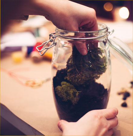 Terrarium-PHOTO-3
