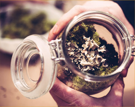 Terrarium-PHOTO-4