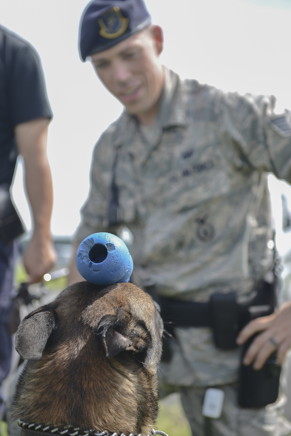 Topa, 374th Security Forces Squadron military working dog, balances a kong on his head at Yokota Air Base, Japan, July 24, 2015. The toy is used to reward Topa for good practices and behaviors and to show his discipline during demonstrations. (U.S. Air Force photo by Airman 1st Class David C. Danford/Released)