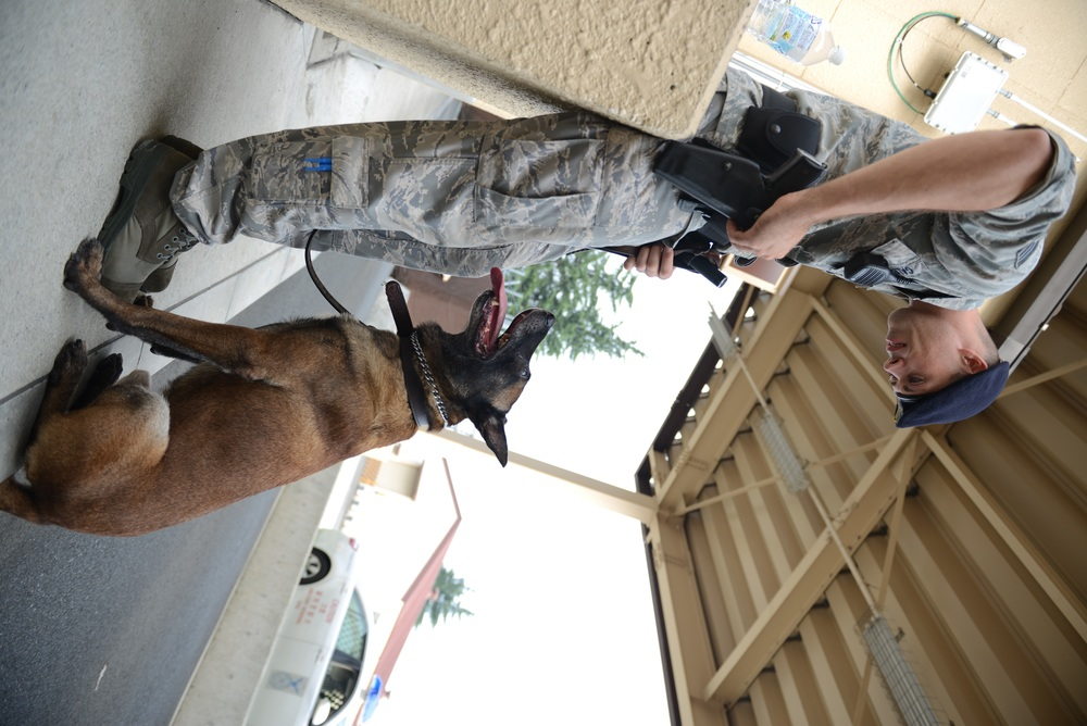 Staff Sgt. Nicholas Galbraith, 374th Security Forces Squadron military working dog handler, communicates with his MWD using simple commands and body language at Yokota Air Base, Japan, July 29, 2015. According to Galbraith, consistency is key when training MWDs. (U.S. Air Force photo by Senior Airman David C. Danford/Released)