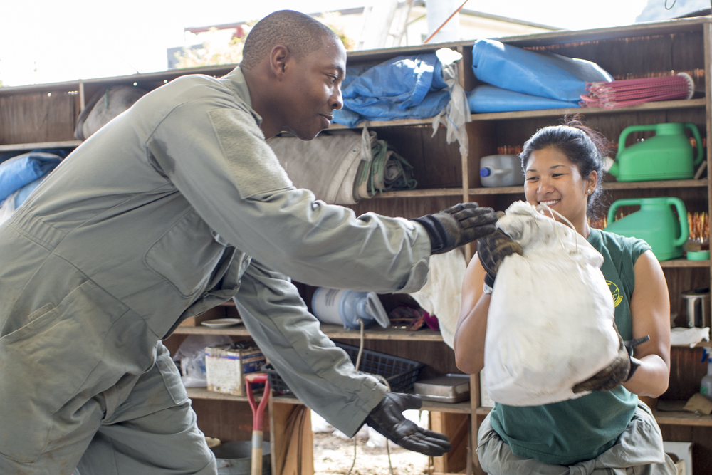 (Left to right) Maj. Korinne Takeyama passes a bag full of mud to Tech. Sgt. Abdul Smith, both from the Civil Engineer Squadron, at a house at Kanuma City, Tochigi Prefecture, Japan, Sept. 15, 2015. Sixty Airmen and civilians from the 374th CES volunteered to help at sites in the Ka-sono area in support of floods and landslides caused by the heavy rainfall associated with the post-tropical remnant of Tropical Storm Etau, which stalled over eastern Japan, dumping up to 17 inches of rain in 24 hours, from Sept. 10 to Sept. 11. (U.S. Air Force photo by Osakabe Ya-suo/Released)