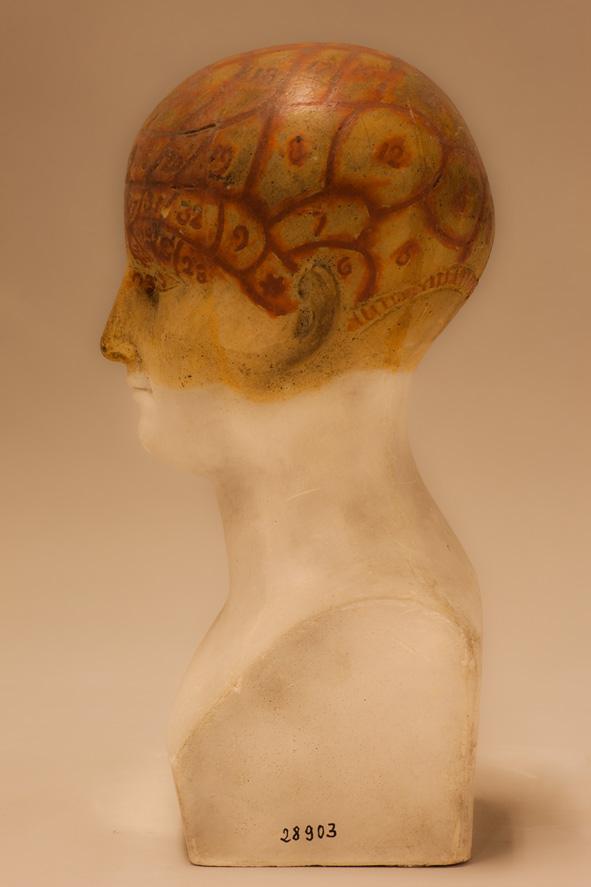 Female Phrenology Bust (left profile) 2010