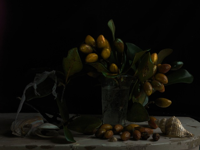 Still Life with Karaka Drupes and Gecko Skin 2012.jpeg