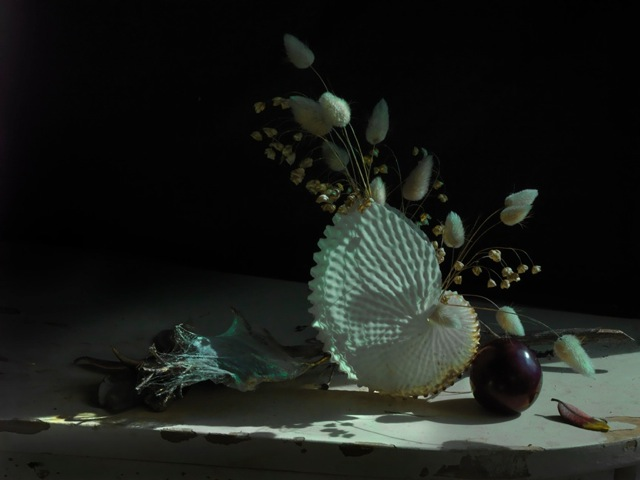 Still Life with Paper Nautilus and Plum 2012.jpeg