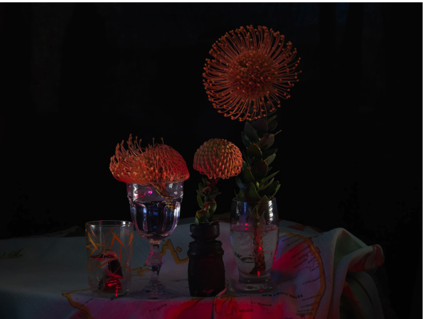 Still Life with Kookaburra, Deoderant bottle and Protea,.jpg