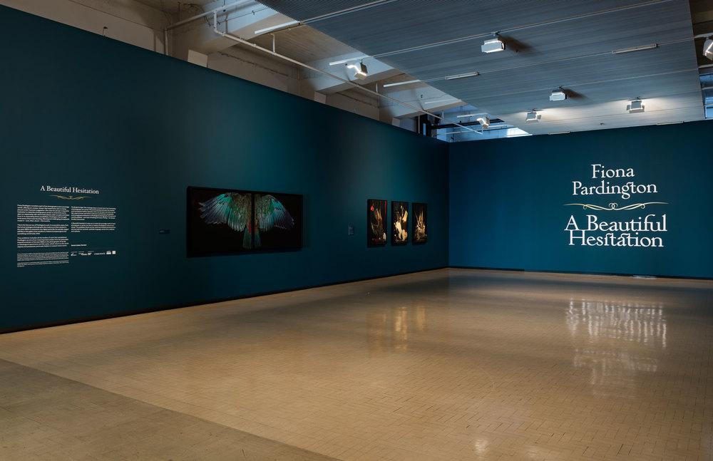 Fiona Pardington A Beautiful Hesitation (installation view) 2015