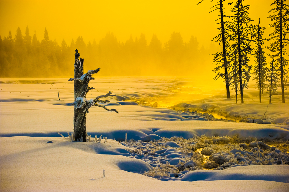 Yellowstone Light