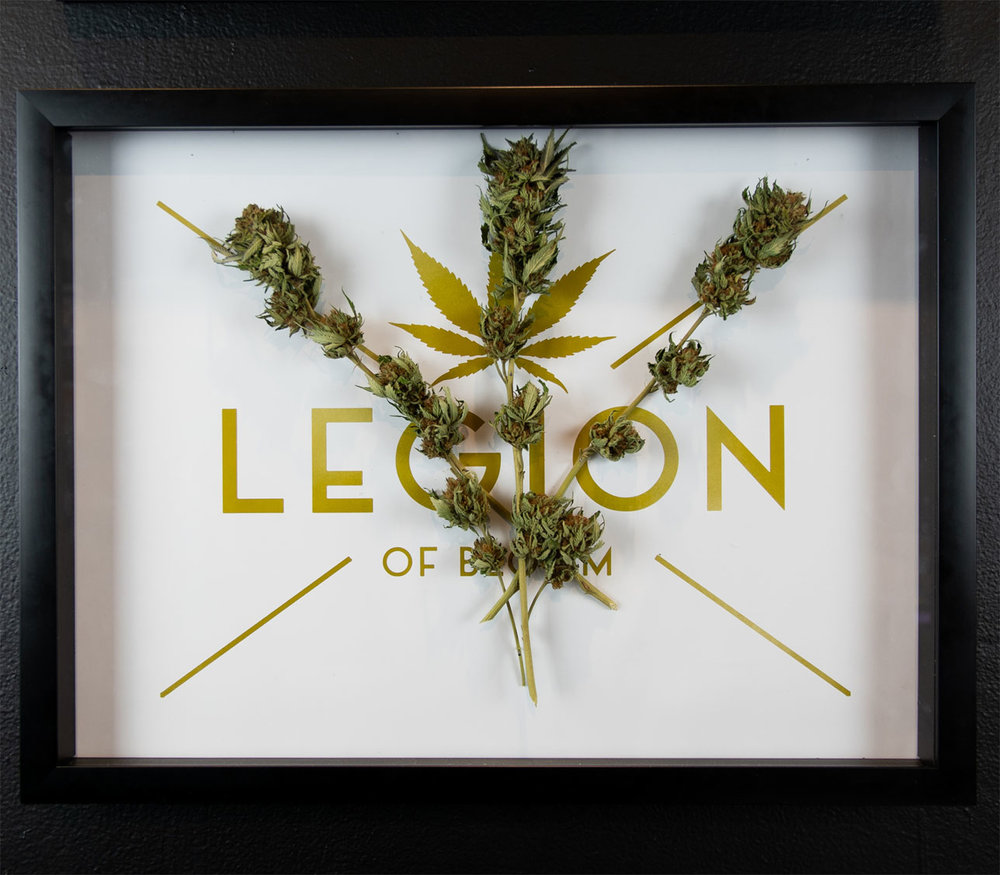 "The LEGION of Bloom  Troy Meado   Mango Sapphire OG (Outdoor)  , 2018 Cannabis and Print 20"" x 15""  NFS"
