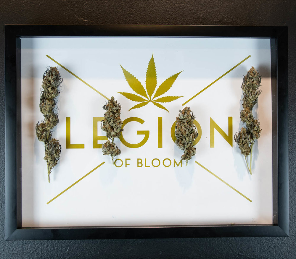 "The LEGION of Bloom  Troy Meadows   Peyote Purple x Destroyer (Indoor)  , 2018 Cannabis and Print 20"" x 15""  NFS"