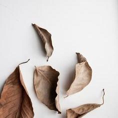 Autumn8.jpg