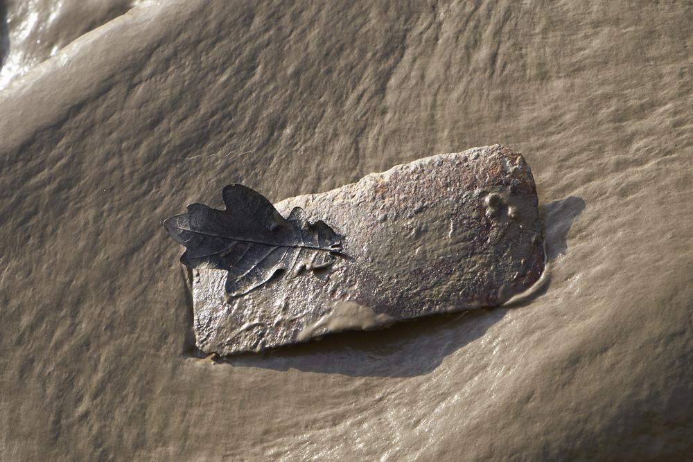 Leaf on metal meets sludge