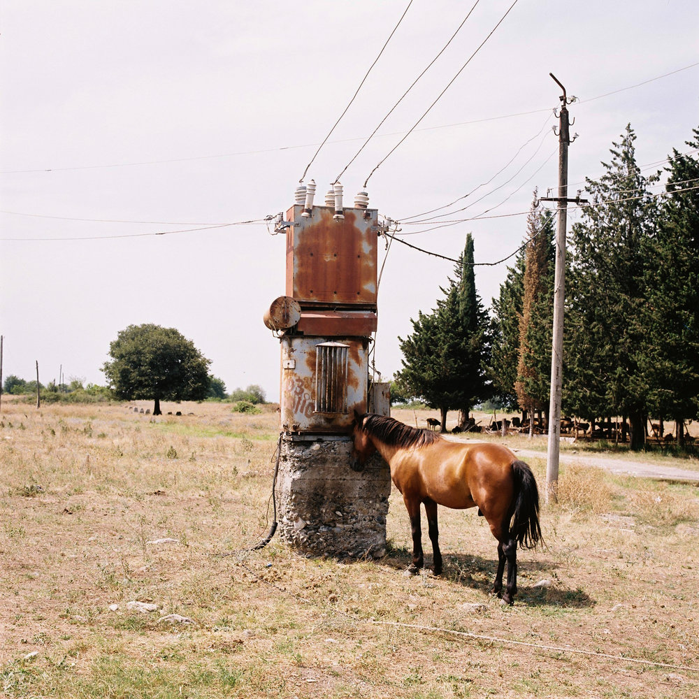 000001georgia_caballos.jpg